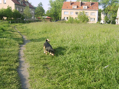 Kajtek 001 ;-) (Gudowski) Tags: jelenia gra