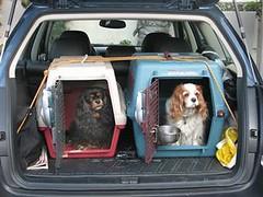 DogCars