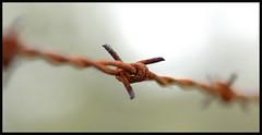 ALAMBRADA (stavlokratz) Tags: espaa fence spain segovia alambrada lagranjadesanildefonso flickrstars aplusphoto focuslegacy photofaceoffwinner