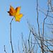 Emilcar 50 - Manzanas en otoño