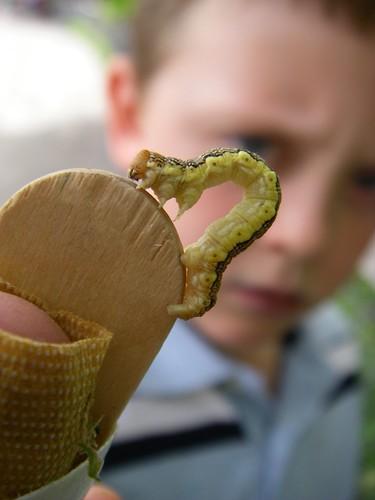 caterpillar-on-finger-splint