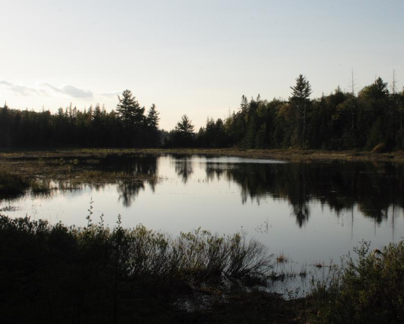 beaver pond at sunset