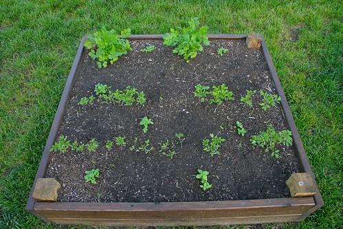 Cilantro, basil & tomatoes