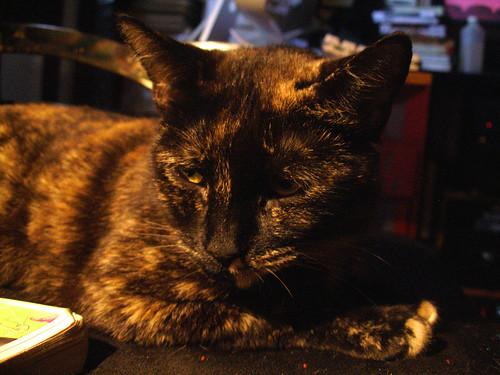 Moni Pretty on Chair