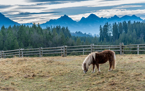 Horse Grazing - Bavarian Alps
