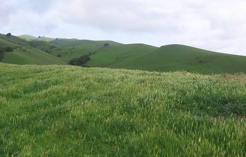 Shimmering grass