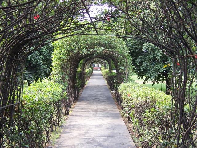 Un camino con la naturaleza