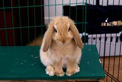 Ukkie (Sjaek) Tags: pet baby cute rabbit bunny animal adorable fluffy ukkie