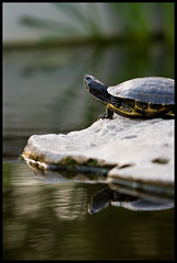 Turtle, Bokeh #2 - by loudtiger