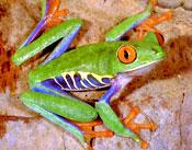 tropical-frog.jpg