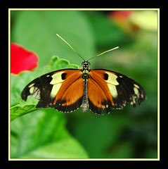 Butterfly - by Rickydavid