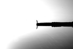 Salton Sea (viks_patel) Tags: white facebook black38white