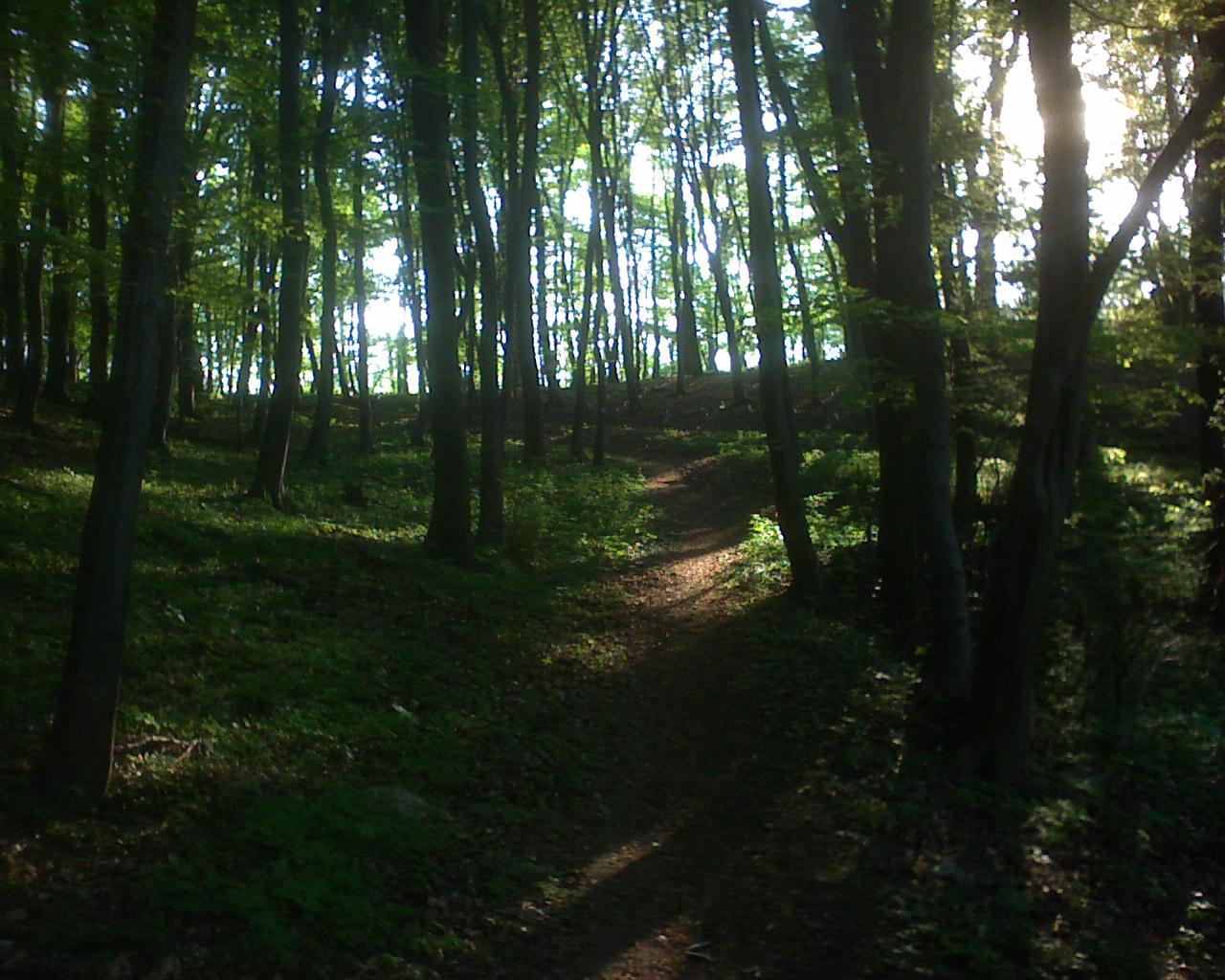 Az erdő gyönyörű