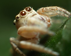 eensie weensie spidew (on2boy) Tags: macro animals spider images excellent ~ photgraphy evolt olympuse500 cebusugbo flickrsbest on2boy superaplus aplusphoto
