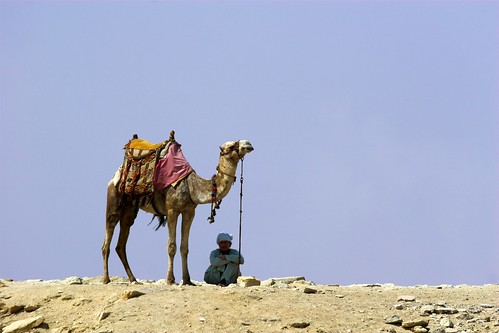 Resting in the shadow of the camel