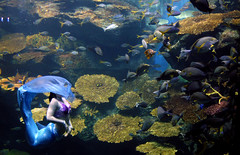 The Diminutive Fishwoman (balrogs kill) Tags: thailand aquarium bangkok mermaid krungthep balrogskill siamoceanworld