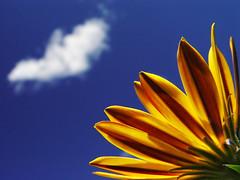 Blue-sky Thinking - by dandy_fsj