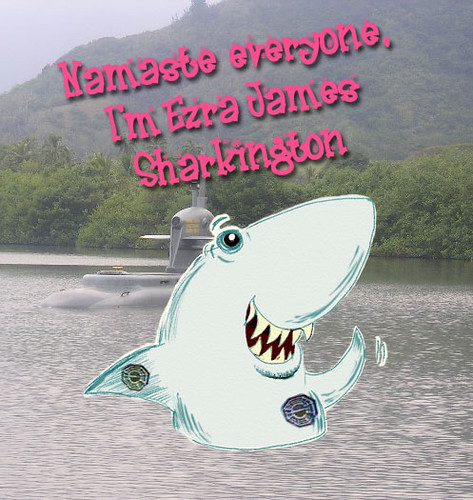 Namaste Sharkington