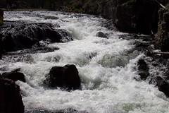 Rapids (benagain_photos) Tags: river rapids yellowstone yellowstonepark