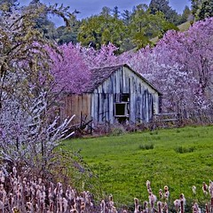 Rita Crane Photography:  Twilight and Blossoms, Mendocino County (Rita Crane Photography) Tags: california trees nature garden square landscape spring stock blossoms explore mendocino fairyland renewal cherrytrees appletrees stockphotography oldhomestead andersonvalley mendocinocounty squarephoto 500x500 blueribbonwinner plumtrees supershot californianature ritacrane anawesomeshot californiamaritime