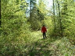 matt_forest