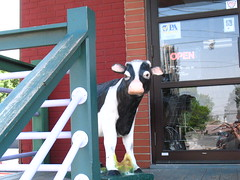 Cow Guards the Door