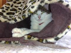 24052007127.jpg (judey) Tags: cat twinkle