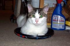 My Saucer