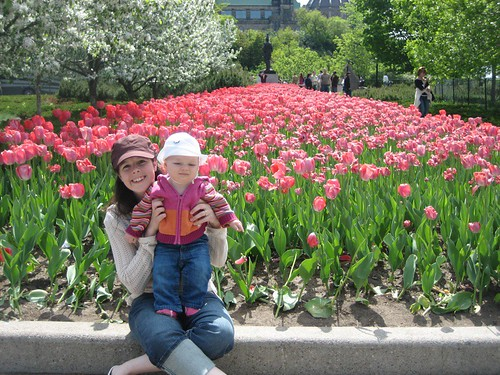 At the Tulip Festival