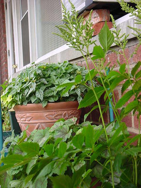 Shade Garden - 05/28/07