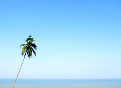 Mr. solo (rakaz (Digital Monk)) Tags: blue tree beach water alone coconut goa solo solitaire sear sonycybershotdsch2