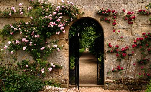 Flores de Oxford (y 3)