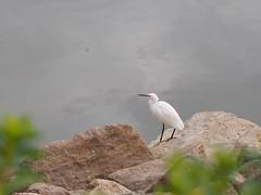 (Polotaro) Tags: mzuikodigital45mmf18 bird nature olympus epm2 pen       zuiko  12