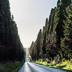 """Bolgheri, one of our fav places of #Tuscany. """"I cipressi che a #bolgheri alti e schietti van da San Guido in duplice filar, quasi in corsa giganti giovinetti mi balzarono incontro e mi guardar."""" 😊🌄 (My Travel in Tuscany) Tags: ifttt instagram bolgheri tuscany toscana livorno cypresses"""
