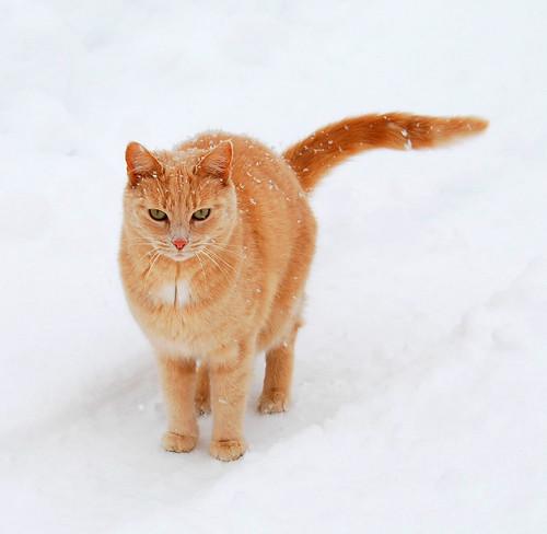 kočička v zimě na cestě ve sněhu