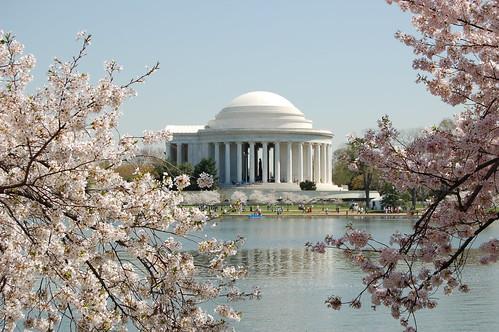 Thomas Jefferson Memorial & Cherry Blossoms