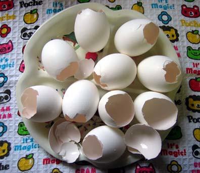 Empty Eggshells