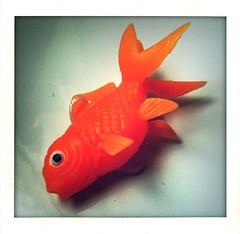 stranded (*monika) Tags: orange fish toy fisch koi spielzeug 3gs iphone rubberfish gummifisch koikarpfen photogene iphoneography shakeitphoto