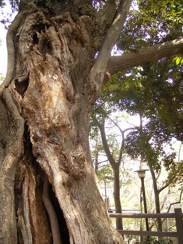 木の中に木が生えているの。途中から、木の外に出ているの。わかるかしら?