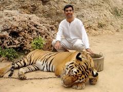 Alongside a Tiger (Swamibu) Tags: thailand temple tiger 101 flickrsbest impressedbeauty wowiekazowie diamondclassphotographer flickrdiamond