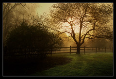 An Audubon Morning (mikonT) Tags: morning fog nikon searchthebest d70 supershot fli