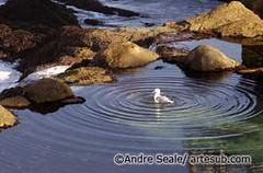 Monterey 04©