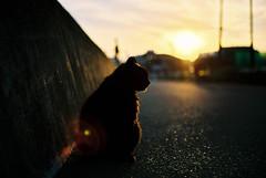 夕焼け黒猫