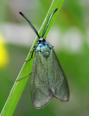 nature cam moth gloucestershire forester