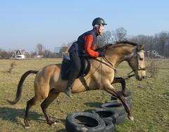 Конь смирился и возит мешок через препятствия