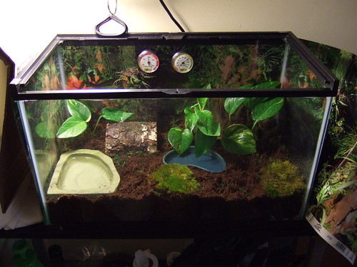 Frog Tank Setup With Pictures Talk To The Frog