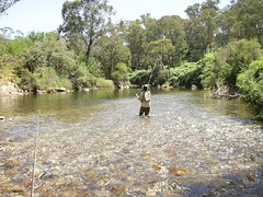 Swampy plains river Upper (hollis_corey) Tags: mountains water river fishing hills nsw trout snowymountains troutfishing khancoban swampyplainsriver