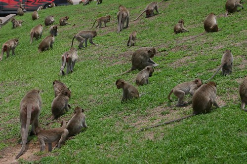 Lop Buri monkey squad