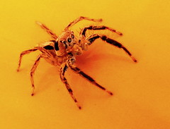 Eight legged macro