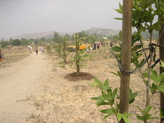 After (forgot to take the before, but you can imagine it) (Zach Behrens) Tags: losangeles sanfernandovalley treeplanting treepeople lvt northeastvalley lakeviewterrace